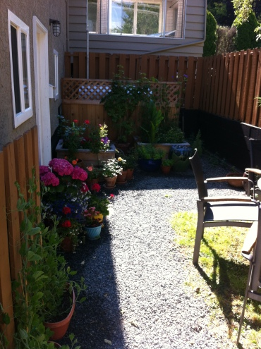 This is my backyard patio area. I have like 8 miniature roses, three full size roses, some sweet peas and hydrangreas